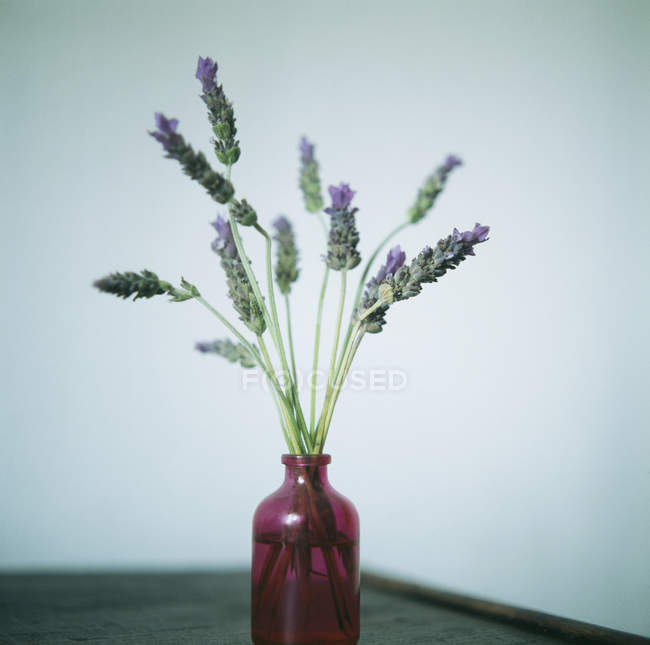 Lavender flowers in vase on table. — Stock Photo