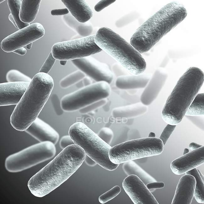 Bacterial infection and reproducing bacteria — Stock Photo