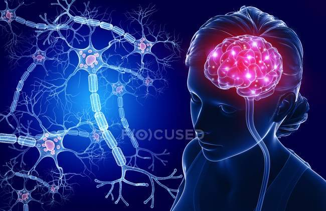 Brain and nerve cells — Stock Photo