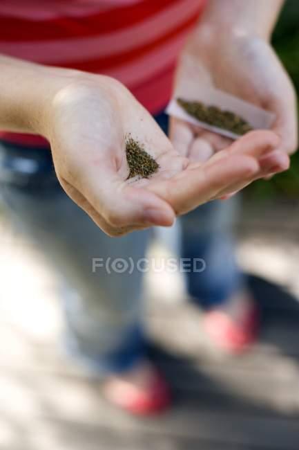 Gros plan d'une adolescente tenant du tabac, du mélange de cannabis et des cigarettes . — Photo de stock