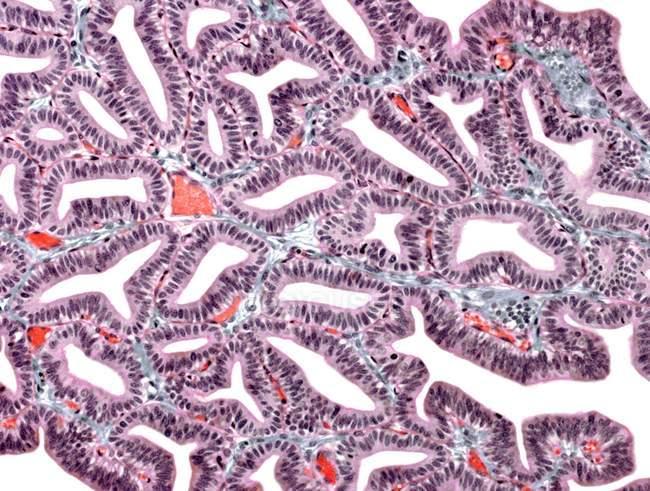 Estructura celular de trompas de Falopio - foto de stock