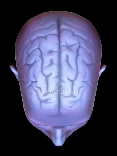 Cabeza humana con cerebro - foto de stock