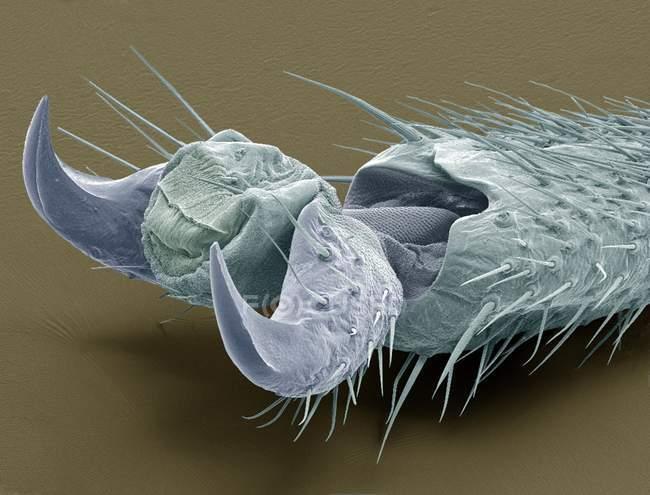 Pé de pau de insetos — Fotografia de Stock
