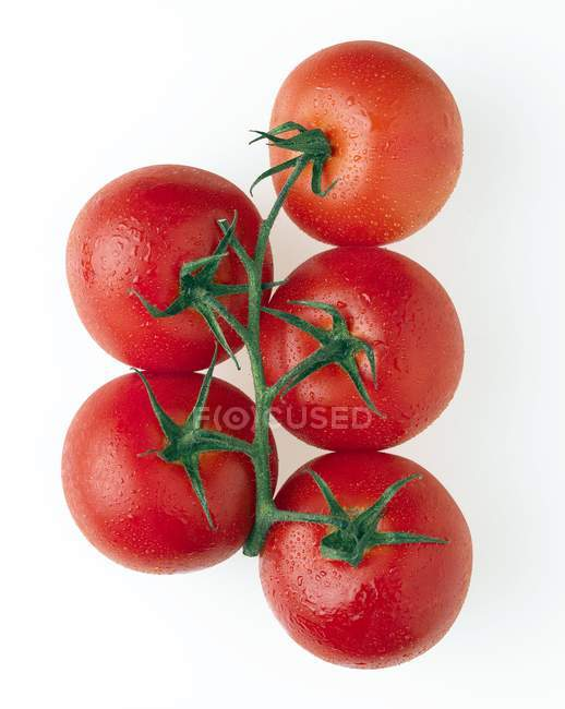 Cherry tomatoes on vine on white background. — Stock Photo