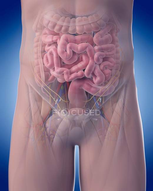 Visual render of internal organs — Stock Photo