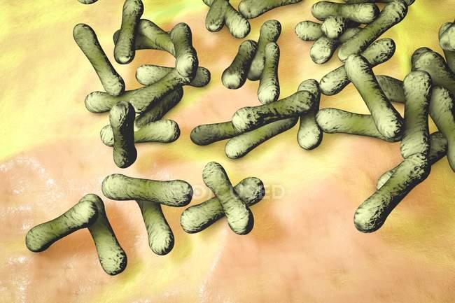 Batteri a forma di bastone Corynebacterium diphtheriae — Foto stock