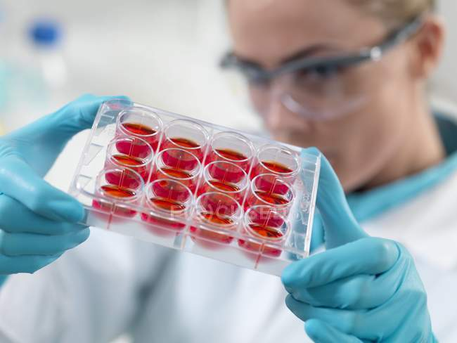 Female researcher holding medium tray. — Stock Photo