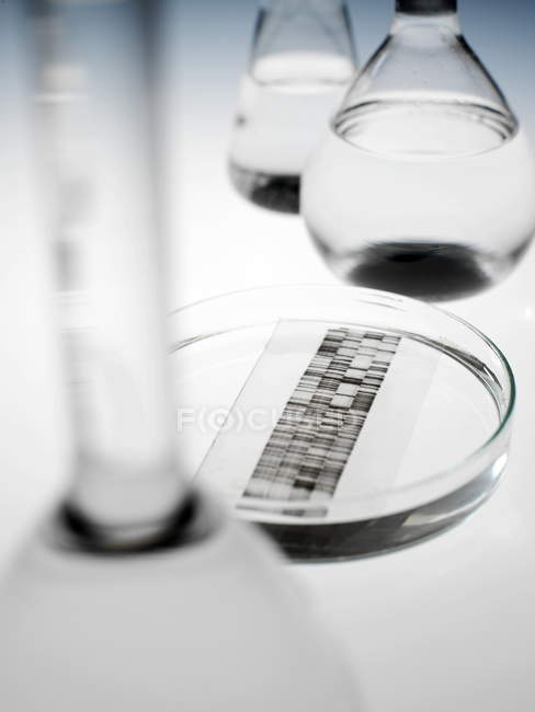 DNA autoradiogram in petri dish in laboratory, close-up. — Stock Photo