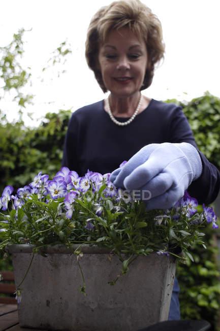 Mature woman tending to pot of pansies. — Stock Photo