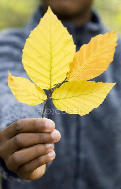 Close-up of branch of autumnal leaves in boy hand. — Stock Photo
