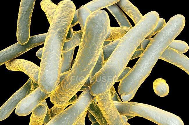 Микобактерии туберкулеза бактерии — стоковое фото