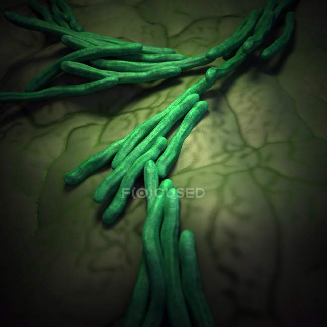 Rod-shaped bacterial strands — Stock Photo
