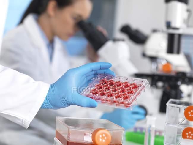 Científico sosteniendo placa de varios pozos con medio de crecimiento . - foto de stock