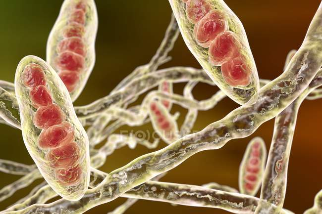 Trichophyton mentagrophytes cause of athlete foot — Stock Photo