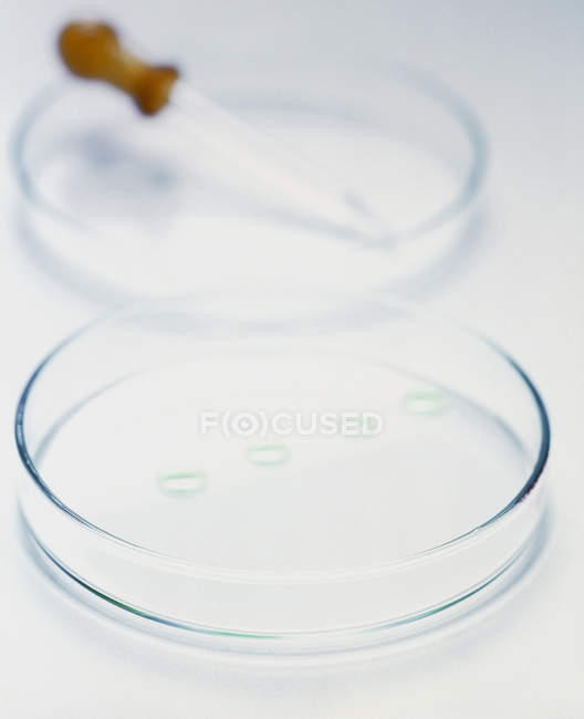 Close-up of petri dishes with pipette. - foto de stock