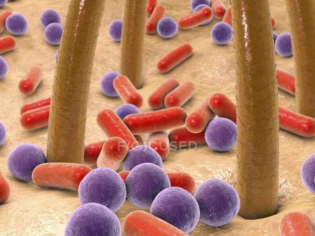 Бактерии на коже человека — стоковое фото
