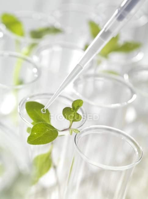 Semis verts dans des éprouvettes, gros plan . — Photo de stock