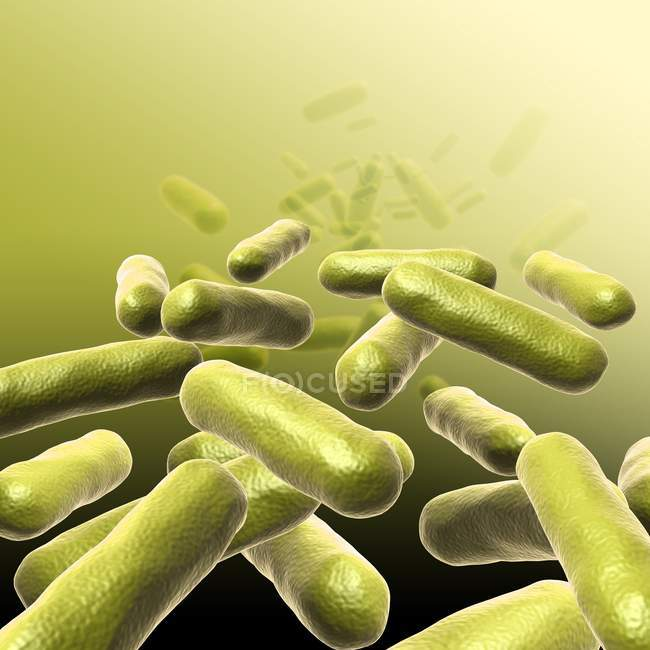 Rod-shaped bacteria — Stock Photo