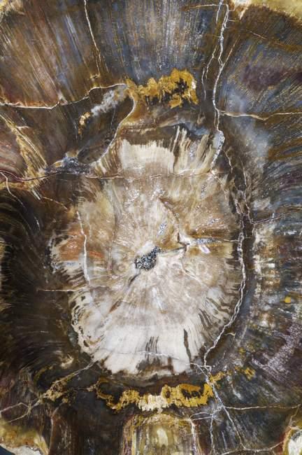 Patrón de madera petrificada, marco completo . - foto de stock