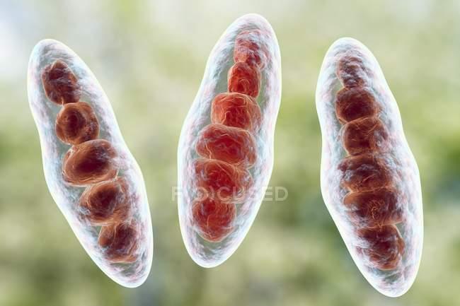 Trichophyton mentagrophytes cause du pied d'athlète — Photo de stock