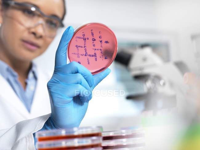Female scientist examining microbiological culture in petri dish. — Stock Photo