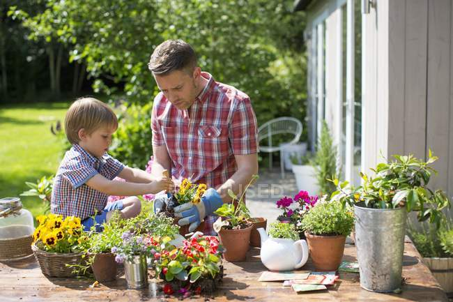 Father and son potting up plants in garden. — Stock Photo