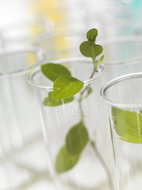 Green seedlings in test tubes, close-up. — Stock Photo