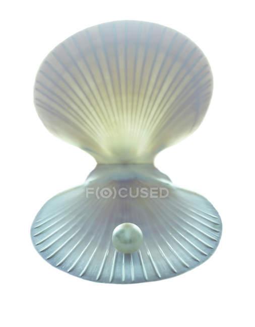 Scallop shell e perla su priorità bassa bianca. — Foto stock