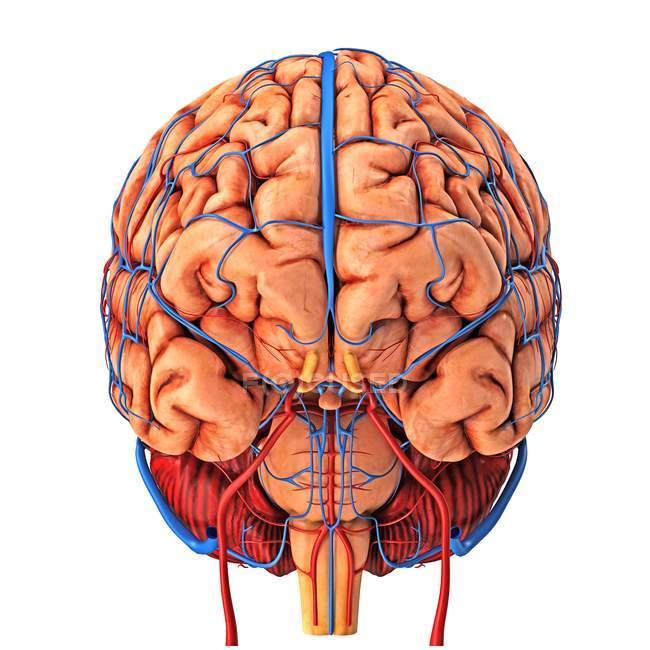 Rifornimento di anima del cervello — Foto stock
