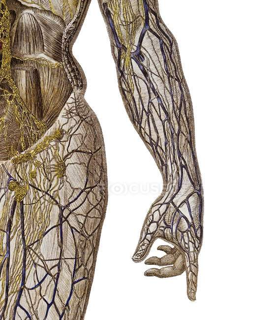 Representação do sistema circulatório — Fotografia de Stock