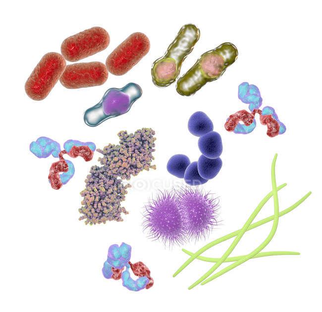 Microbes and molecules of different shapes — Stock Photo