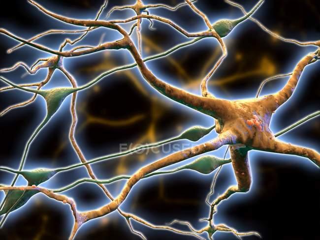 Cellules nerveuses et jonctions intercellulaires — Photo de stock