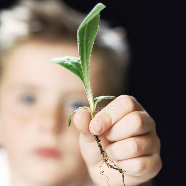 Close-up of plant seedling holding by elementary age boy. — Stock Photo