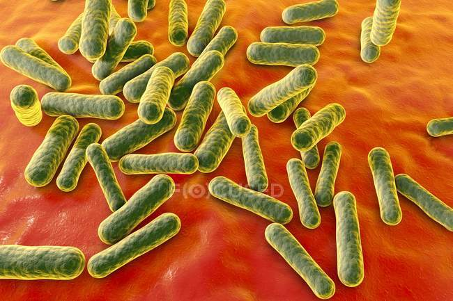 Nicht pathogene Propionibacterium-Bakterien — Stockfoto