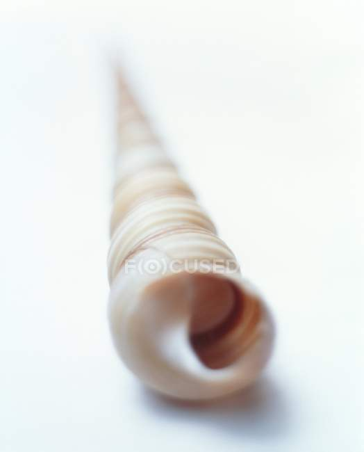 Guscio di lumaca di mare non identificata. — Foto stock