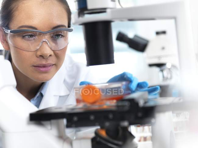 Female researcher using light microscope for examining stem cells in culture jar. — Stock Photo
