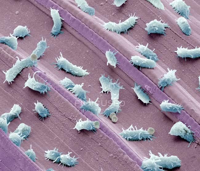 Bacterias estancadas del agua - foto de stock