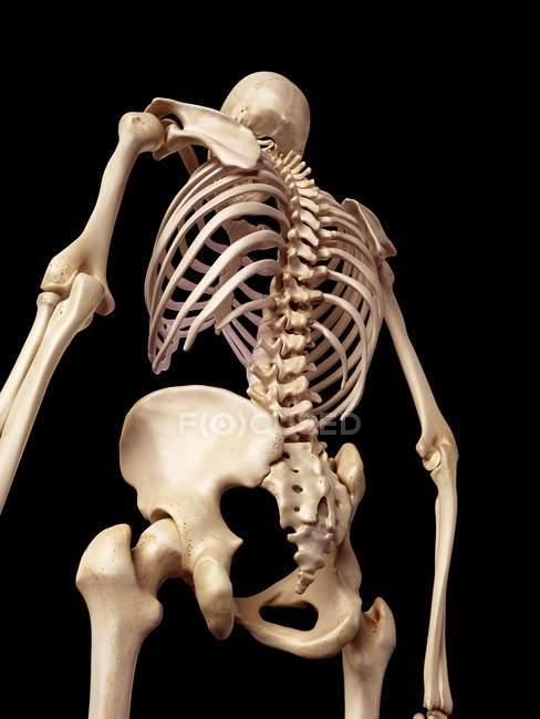 Menschliches Skelett-Struktur — Stockfoto | #160566572