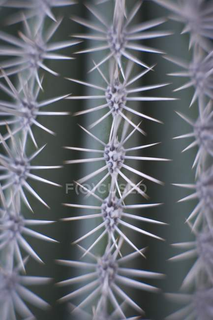 Close-up of cactus spines on plant. — Stock Photo