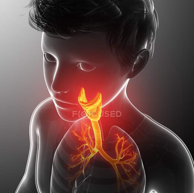 Anatomie thyroïdienne humaine, illustration informatique . — Photo de stock
