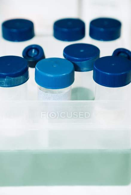 Close-up of sample tubes in rack. — Stock Photo