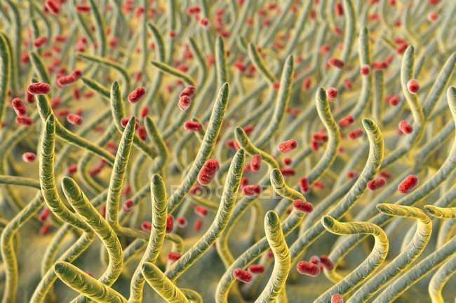 Klebsiella pneumoniae бактерии в дыхательных путях, компьютер иллюстрации. — стоковое фото