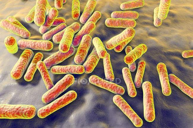 Non-pathogenic Propionibacterium bacteria — Stock Photo