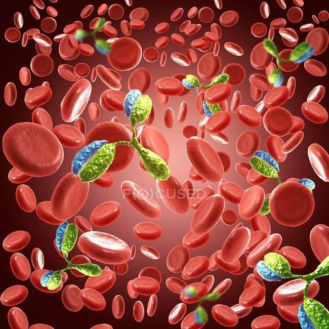 Illustrazione digitale dell'immunoglobulina nel sangue . — Foto stock