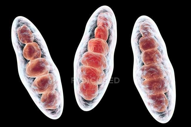 Trichophyton mentagrophytes fungi — Stock Photo