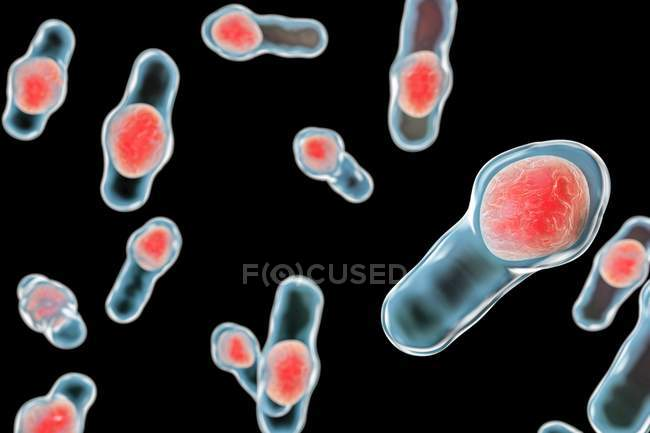 Clostridium difficile bacteria — Stock Photo