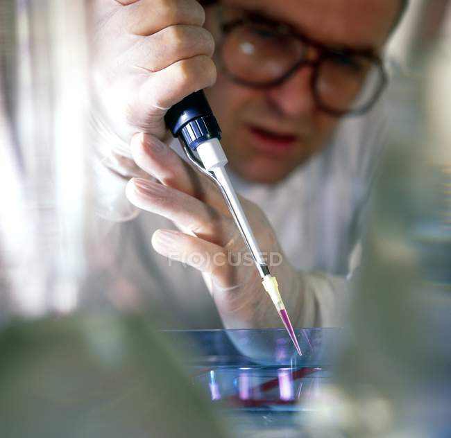 Researcher loading sample of DNA into agarose gel for separation by electrophoresis. — Stock Photo