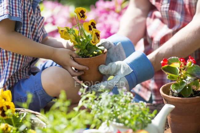 Father and son holding plant in garden, close-up. — Stock Photo