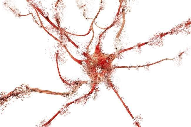Apoptose des cellules neuronales — Photo de stock