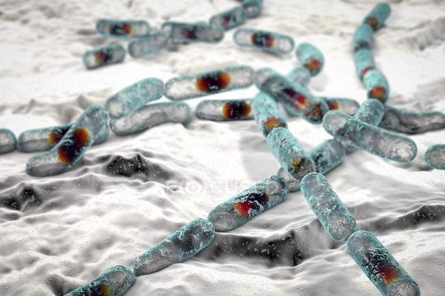Bacillus cereus бактерии, Иллюстрация — стоковое фото